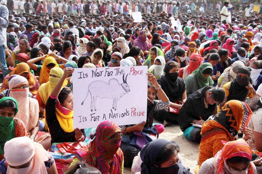 Jallikattu: Protesters at Marina Beach Cheer Ordinance