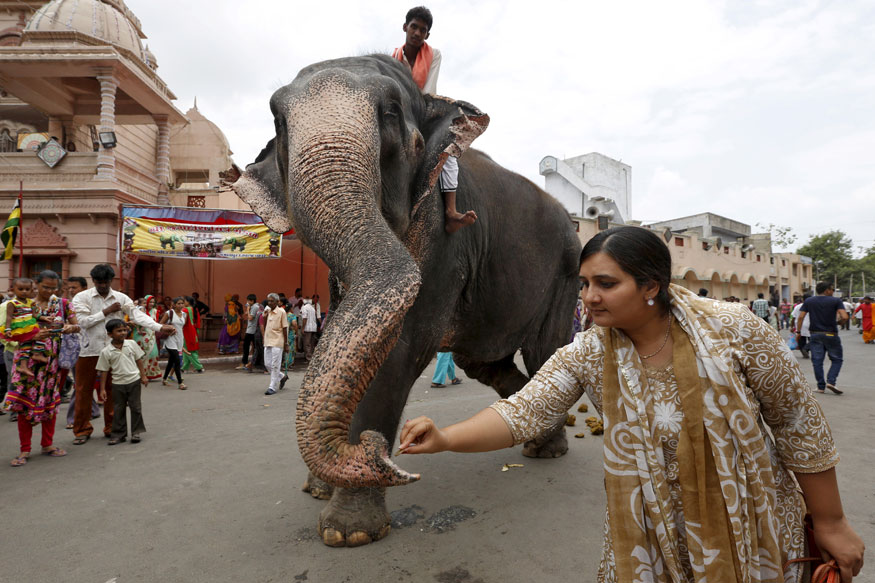 Madras High Court Slams Use of Elephants to Bless People