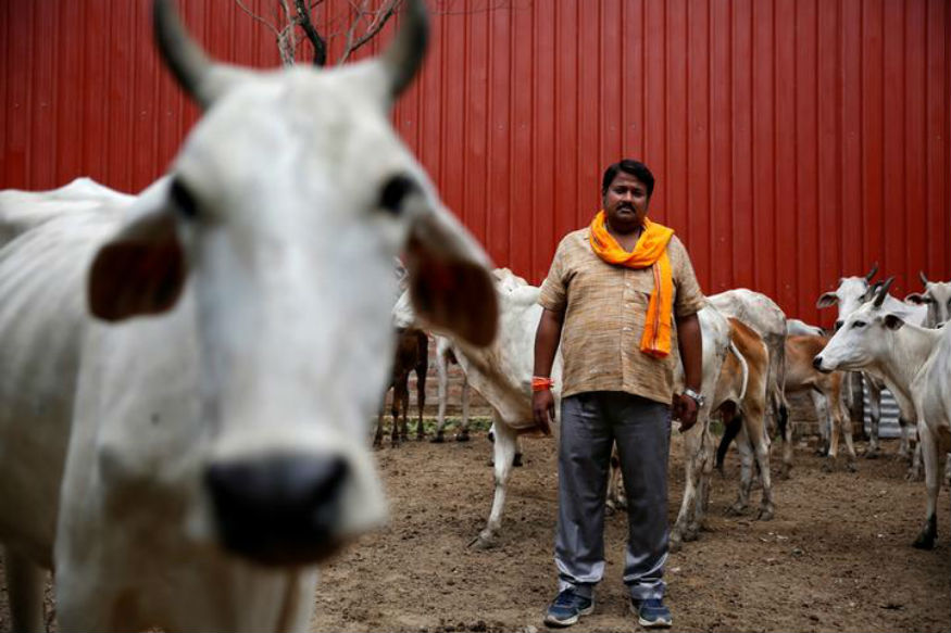 Haryana Prisons to Fight Crime With Cattle, 'Magical Cow Therapy' Soon