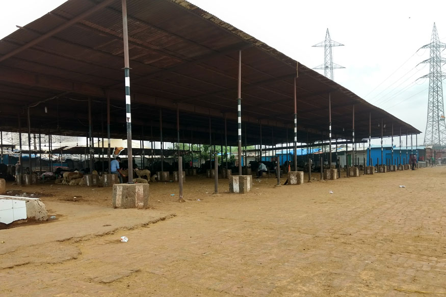The Bhais Mandi at Gazipur which used to buzz with animals a month ago now runs empty. (Debayan Roy/News18.com)