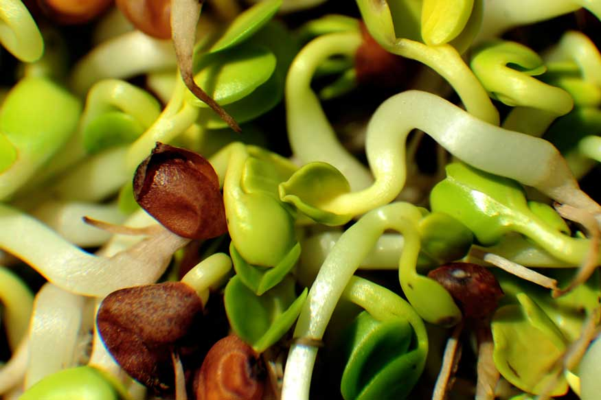 Sprouts: Toss It Up for Healthy Snacking
