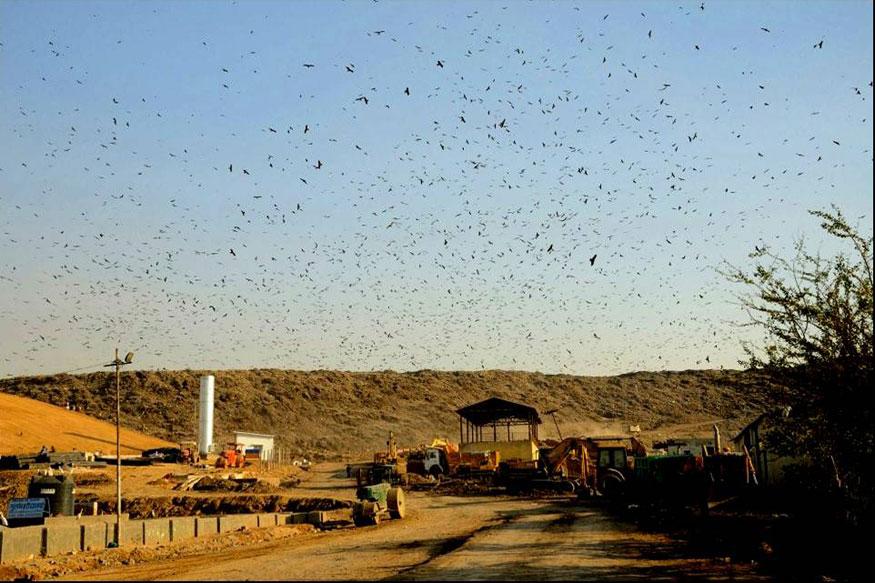 GHZ-Landfill