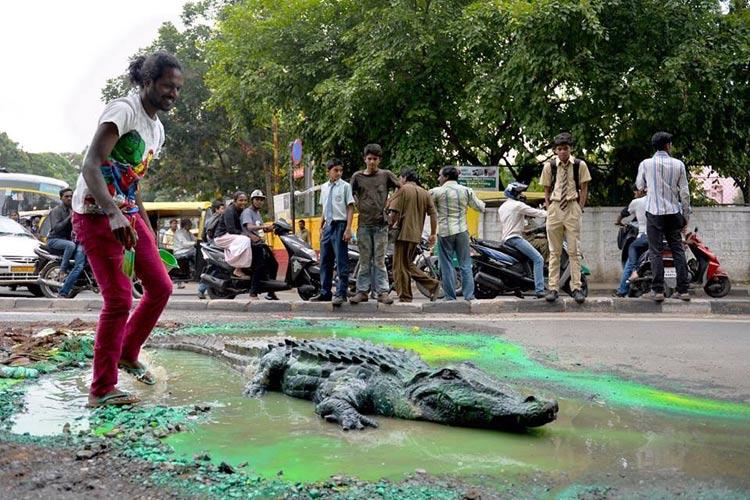 crocodile bengaluru