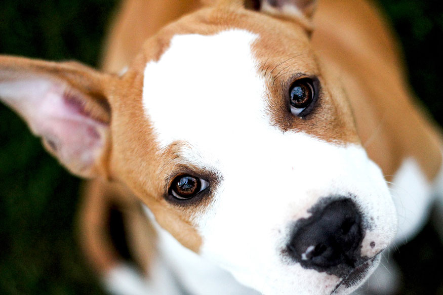Puppy Eyes: Is Your Dog a Master Manipulator?