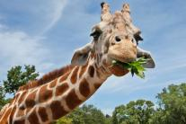 Meet 7 days of Animal Stars