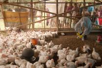 Centre Forms Three-member Committee to Keep Bird Flu in Check