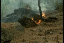 Ground Report: What's Causing Spread of Forest Fire in Uttarakhand?