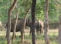Post-Veerappan tourists threaten forest