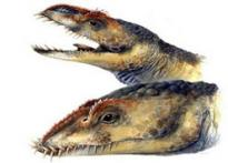 The great ancient reptile discovery