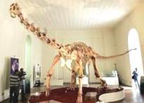 Fossils of new dinosaur species found