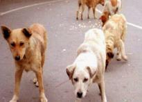 Chennai has a way  for rabies-free India