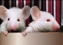 Dead mice bring Jurassic Park to life