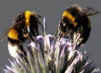 Birds and bees may be gay
