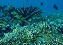 World's coral reefs in danger: scientists