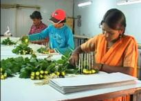 Maha farmers turning florists now