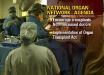 Kidney transplants to be made easy
