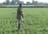 Moneylender 'sets' farmer ablaze