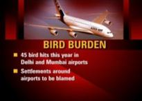 Bird hit menace comes to haunt cricketers