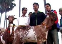 All in a name: Star goats lure buyers this Eid