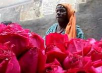 V-Day roses become casualty in Raj's war