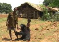 Impact: Bear man in jail, govt to look after girl