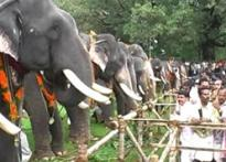 Elephants in Kerala tuck into a jumbo feast