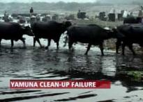 Delhi Jal Board ex-CEO jailed for polluting Yamuna