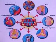 Ethics and science of it: Stem cell research made easy