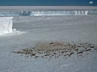 Scientists track penguin poop from space