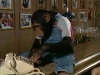 Meet MJ's oddest companion, Bubbles the chimp