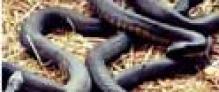 Snake halts Orissa Assembly proceedings