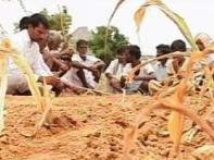 No rains in Andhra, farmers migrate to cities