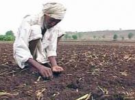 Drought woes claim lives of 20 farmers in Andhra