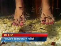 Watch: Fish pedicure, a new spa concept