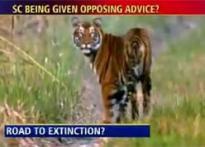 Road through Pench wildlife park to endanger tigers