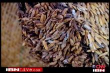 Govt slept, wheat was wasted: official report