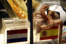 Spain bids for Paul the octopus