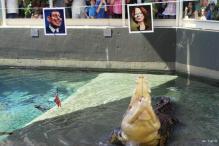 Croc picks Aussie PM as federal poll winner