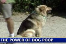 How pet waste can be used to produce power