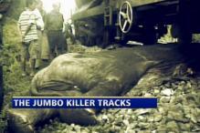 Elephants die on killer railway tracks