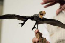 Pterosaurs were soaring fliers and light landers
