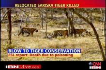 Sariska tiger was poisoned to death: Minister