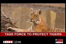 Karnataka sets up special tiger protection force