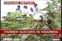 Four Vidarbha farmers commit suicide in 72 hours