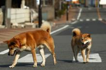 UK: Woman, son jailed over dogs' deaths