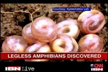 A new family of legless amphibians discovered
