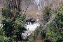 Nagarhole Tiger Reserve smoulders, but who cares?