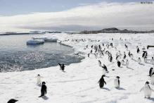 15 distinct regions identified in Antarctica