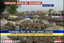 Rajasthan: 40,000 tonnes of rotting grain ignored