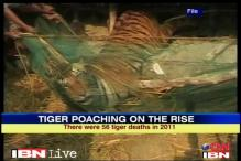 Almost 50 tigers dead in six months in India